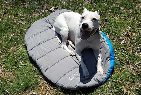 Wild Getaway Best Dog Sleeping Bags For Camping